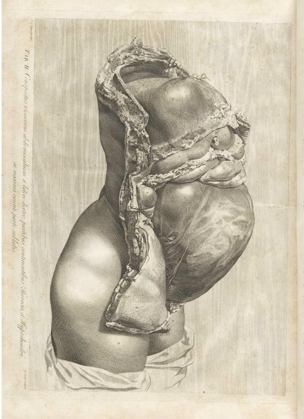 урок анатомии от аллы юрьевны фото смотреть