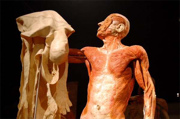 uno dei manichini presenti in Body Worlds