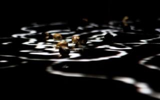 Digital Life 2012 | Orienta:è quì ora, che decido di fermarmi