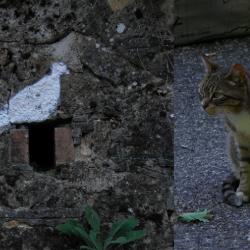 Francesco, il gatto che mi seguiva.