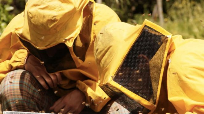 il-tempo-delle-api-documentario