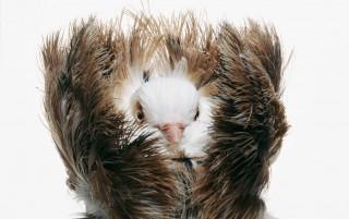 DARWIN'S PIGEONS by Richard Bailey