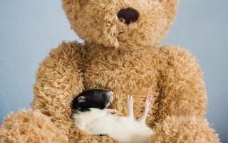 cuddle-rats-7